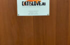 Отель для кошек в Москве